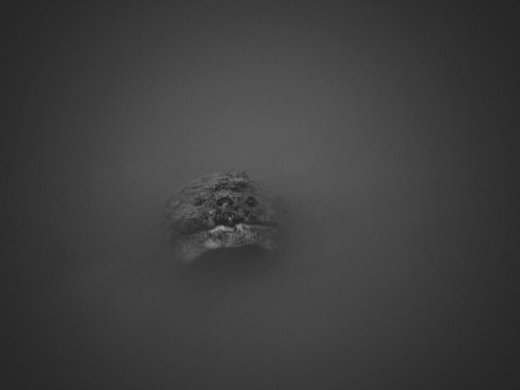 Murk by Bryan Bowman