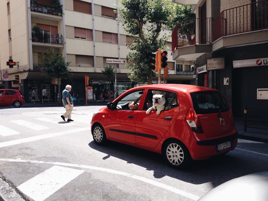 Bulldog, Naples, Italy - photo by Kerrin Nishimura