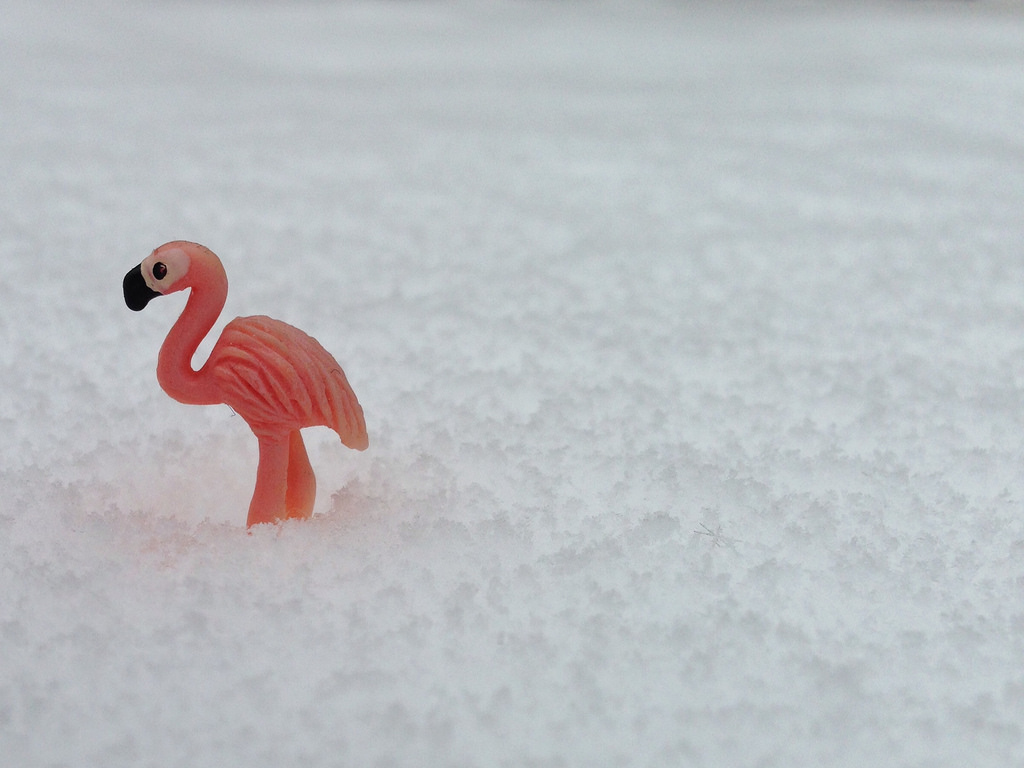 Flamingo in snow by number7cloud
