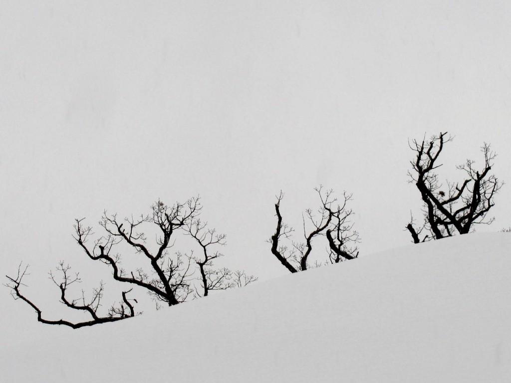 White on White by Leonard Jewler