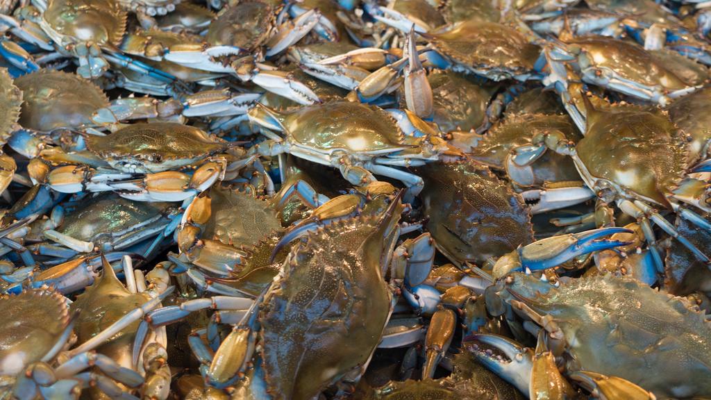 DC Fish Market by John Sonderman