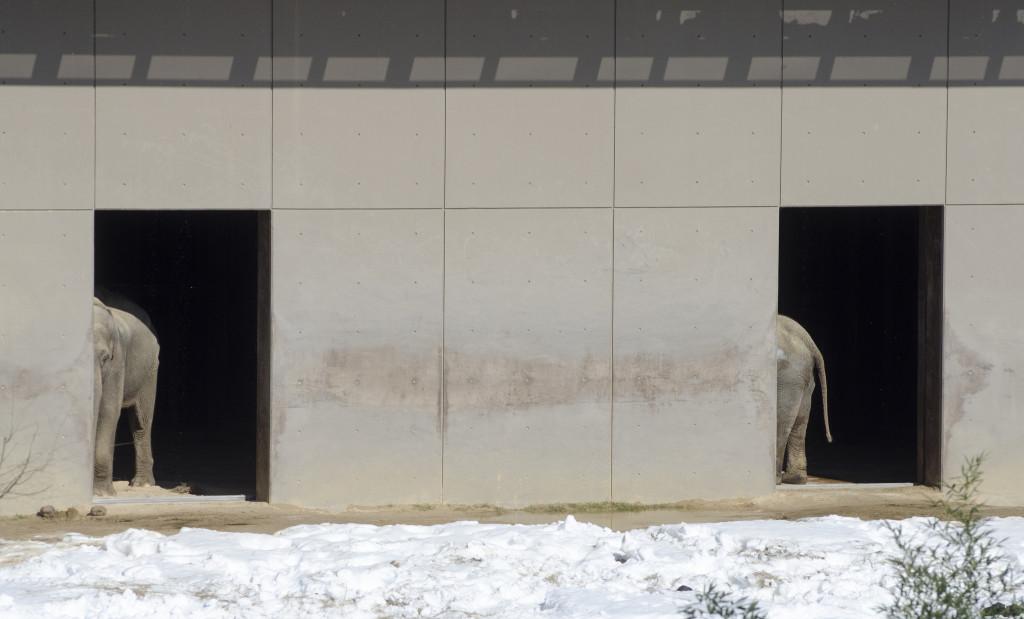 Long Elephant by Tim Brown