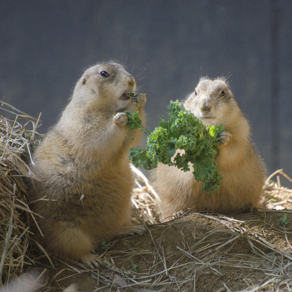 Prairie dog companions by Tim Brown